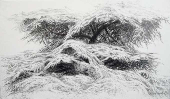 Siméon Colin, Cèdre 130 X 195 cm  Crayon sur toile synthétique verni