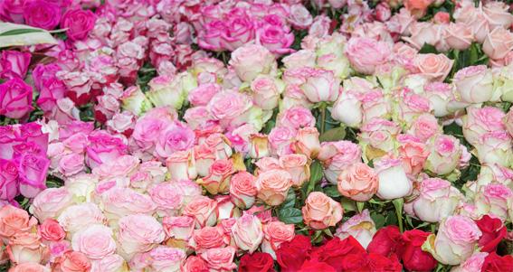 Au Texas, les fleurs sont à l'honneur. Des destinations de voyage inhabituelles