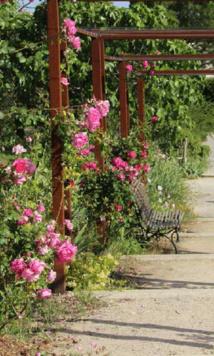 Les Jardins du MIP (Musée international de la Parfurmerie) fêtent leurs 10 ans, à Mouans-Sartoux (06)