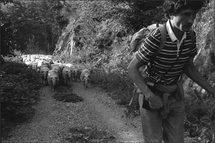 Avril et mai, Transhumance, Photographies Michel Ayrault à la Galerie Noir & Blanc, Saint-Etienne