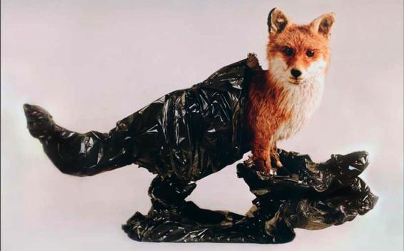 Extrafine, FOX, tirage lambda, 100x75 cm, 2009