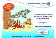 L'aquarium de Lyon est en partenariat avec Bus Le grand tour, du 1er juillet au 31 août, ce qui donne lieu à une offre spéciale !