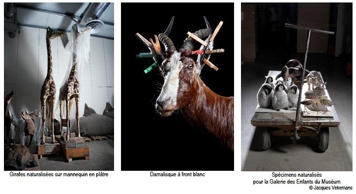 Taxidermie, dans les coulisses du Muséum. Exposition photographique au Jardin des Plantes du 26 janvier au 21 mars 2012