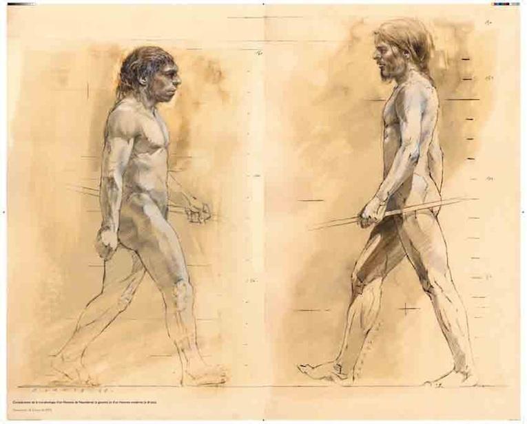 Comparaison de la morphologie de l'Homme moderne (gauche) et Homme de Néandertal (droite) © DR