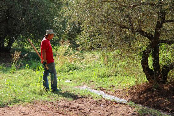 L'olivier, l'eau, l'homme © Pierre Aimar