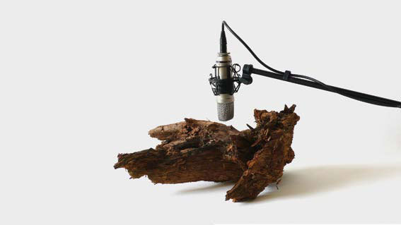 Zimoun - Woodworms, wood, microphone, sound system (2009-2012)  ©  Zimoun