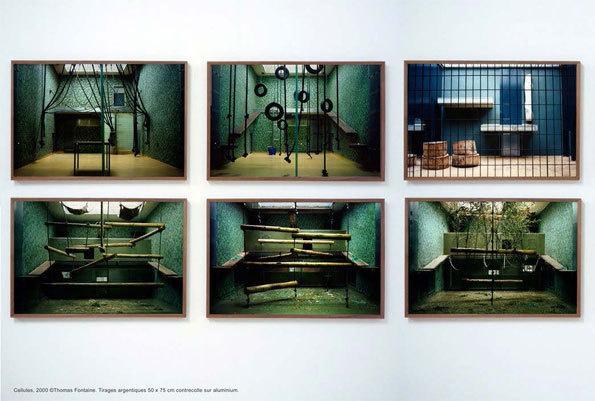 Cabinet de Curiosités, Vol 2 : Naturalia du 15 janvier au 15 mars 2013 à l'Artothèque de Saint-Priest, Rhône