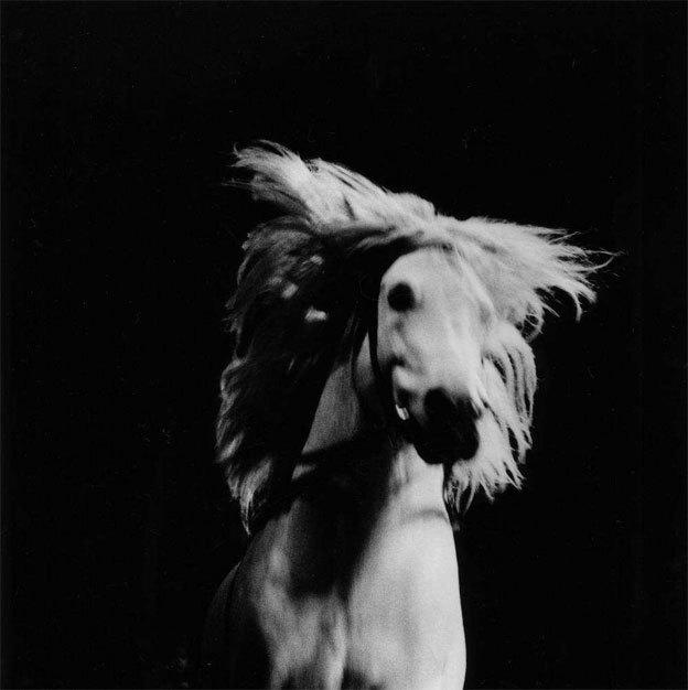 Cheval fou, France, série Quel cirque ? , 1994 © Philippe Lopparelli / Tendance Floue