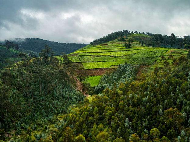 Vue des collines du village de Cyitabi, à la limite de la forêt de Nyungwe. Rwanda, 2013. © Alexis Cordesse