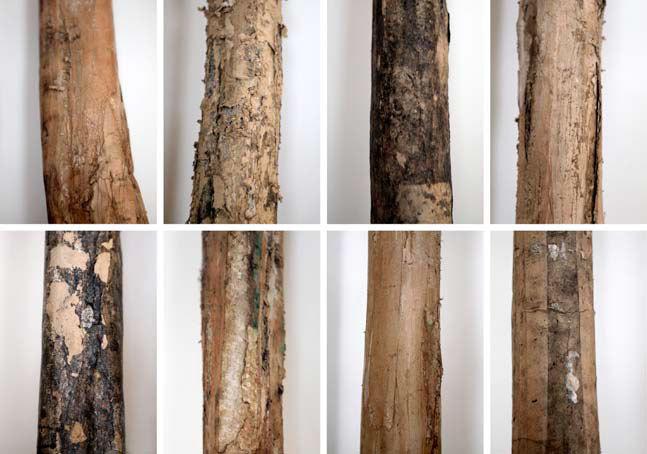 Greta Pasquini, Portraits, 2009-2014, carton, colle, ensemble de 8 éléments, 250 x 250 x 40 cm. Portraits d'arbres d'un jardin de famille. Oeuvre accompagnée d'un matériel sonore (monologue)