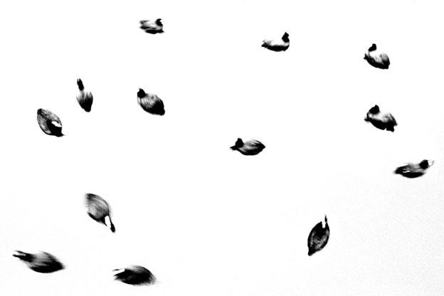 Impatience. Photographies de Jean-François Spricigo, exposition à Flair Galerie, Arles, du 26 mars au 14 mai 2016