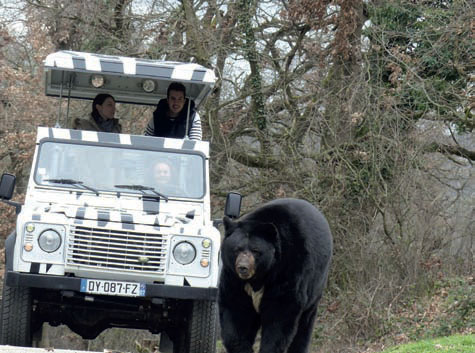 Safari de Peaugres, Ardèche. Observer, comprendre, s'enthousiasmer ou s'émerveiller, saison 2016