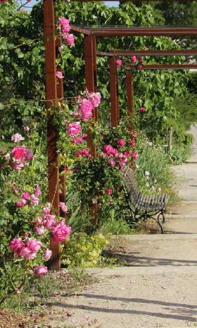 Les jardins du mip mus e international de la parfurmerie f tent leurs 10 ans mouans sartoux - Jardin du musee international de la parfumerie ...