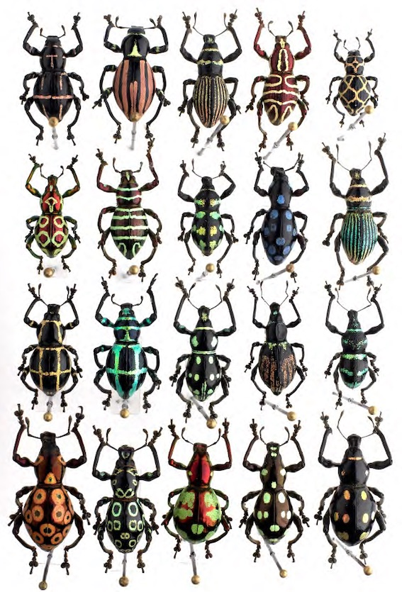 Boîte de coléoptères - Collection de Gilbert Rey – musée des Confluences photo Pierre-Olivier Deschamps – Agence VU
