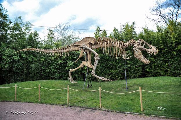 Le Muséum de l'Ardèche de Balazuc (07) installera le jeudi 28 mars 2019 sur son site la copie d'un T-Rex (ou Tyrannosaurus rex)