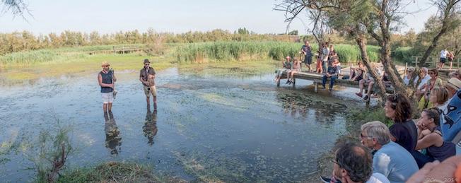 Saxicola Rubi - réserve naturelle du Scamandre