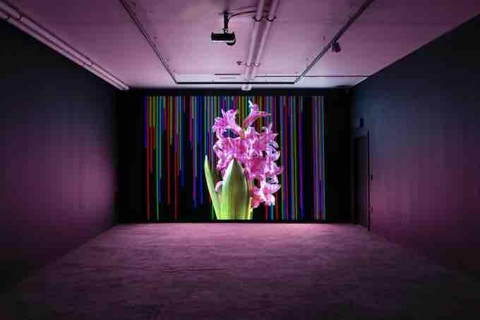 Paris, Centre Culturel Irlandais, exposition Alan Phelan, Echos toujours plus sourds, du 7 janvier au 28 fevrier 2021