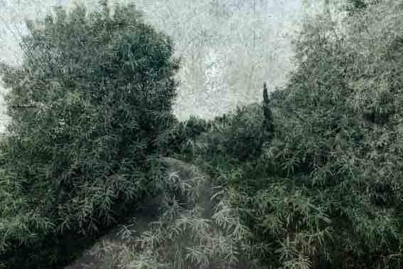 Villeneuve lez Avignon, Abbaye Saint-André : expo « À deux pas d'ici » de Bernard Tribondeau, photos, du 2 mars au 30 mai 2021