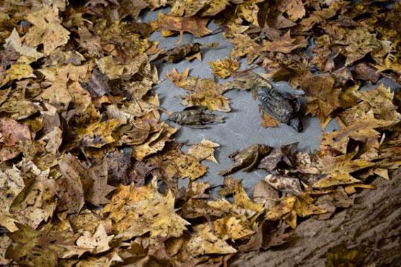 Nature morte (détail) 2016 oiseaux en bronze, feuilles en papier et écorces en pâte à papier artisanale installation de dimensions variables de 4 à 5 m2