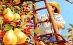 1/11 > Orpierre (Htes Alpes) : 6ème Marché aux Fruits Anciens de la Toussaint dans les Hautes-Alpes