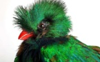 Lyon, musée des Confluences : exposition L'oiseau rare, de l'hirondelle au kakapo, du 18/12/20 au 2/1/22