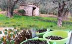 La 52e fête de l'Olive Noire de Nyons du 15 au 17 juillet à Nyons !