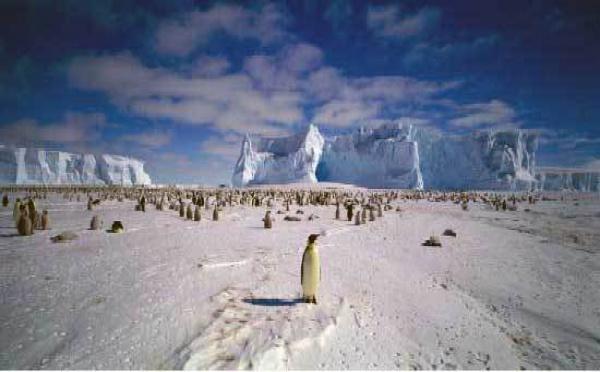 Jusqu'au 4/1 > Terre des Pôles, exposition photo sur les grilles du Luxembourg